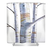 Birch Trees In Three Shower Curtain