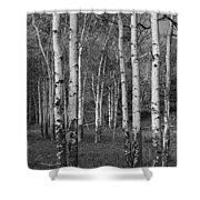 Birch Trees No.0148 Shower Curtain