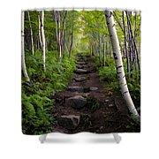 Birch Woods Hike Shower Curtain
