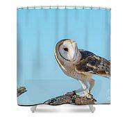 Bird 11 Shower Curtain