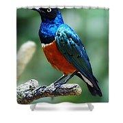 Bird 2 Shower Curtain