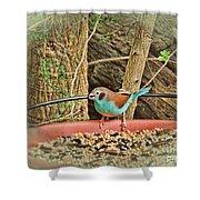 Bird And Feeder Shower Curtain