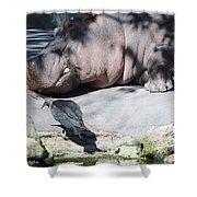 Bird And Hippo Shower Curtain