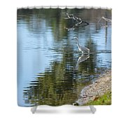 Bird And Pond Shower Curtain