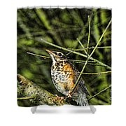 Bird - Baby Robin Shower Curtain by Paul Ward