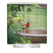Bird Bath Shower Curtain