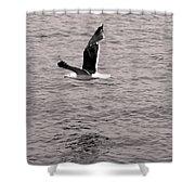 Bird Bw Shower Curtain