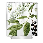 Bird Cherry Cerasus Padus Or Prunus Padus Shower Curtain