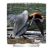 Bird Dance Shower Curtain