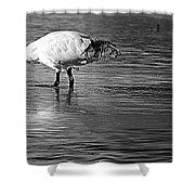 Bird Drinking Shower Curtain