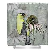 Bird Eating Seeds For One Digital Art Shower Curtain