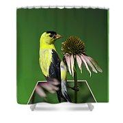 Bird Eating Seeds Shower Curtain