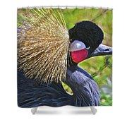 Bird Exotica  Shower Curtain