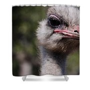 Bird Face Shower Curtain