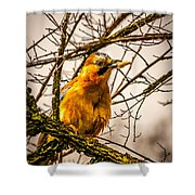 Bird Holding Food In Mouth Shower Curtain