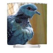 Bird In Blue Dress Shower Curtain
