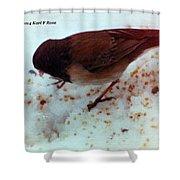 Bird In Snow 2 Shower Curtain