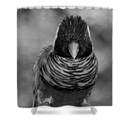 Bird In Your Face Bw Shower Curtain