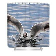 Bird Landing Shower Curtain