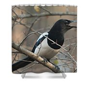 Bird Magpie Shower Curtain