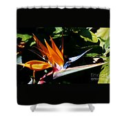Grotto Bay Bird Of Paradise # 1 Shower Curtain