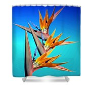 Bird Of Paradise 2013 Shower Curtain