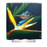 Bird Of Paradise Shower Curtain