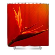 Bird Of Paradise - Flora - Flower Shower Curtain