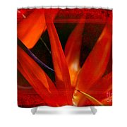 Bird Of Paradise Flower 5 Shower Curtain