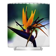 Bird Of Paradise Flower - Square Shower Curtain