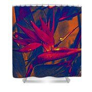 Bird Of Paradise Flower Shower Curtain