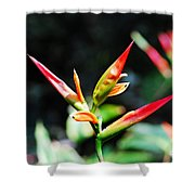 Bird Of Paradise Plant Shower Curtain