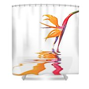 Bird Of Paradise Reflections Shower Curtain