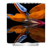 Bird Of Paradise Reflective Pool Shower Curtain