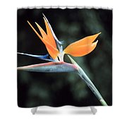 Bird Of Paridise Shower Curtain