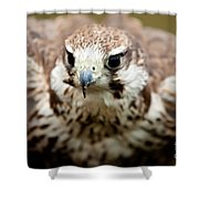 Bird Of Prey Flying Shower Curtain