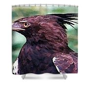 Bird Of Prey In Watercolor Shower Curtain