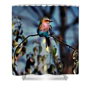 Bird On A Limb Shower Curtain