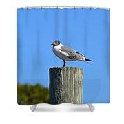 Bird On A Pole Shower Curtain