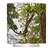 Bird On A Vine In Jungle Forest In Chitwan Np-nepal  Shower Curtain