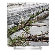 Bird On A Weir Shower Curtain
