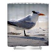 Bird On The Shoreline Shower Curtain