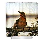 Bird On The Wire Shower Curtain