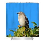 Bird On Tree Top Shower Curtain