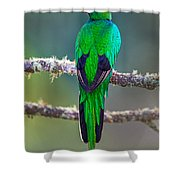 Bird Perching On A Branch, Savegre Shower Curtain