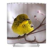 Bird - Pine Warbler - Yellow Beauty Shower Curtain