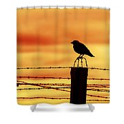 Bird Sitting On Prison Fence Shower Curtain