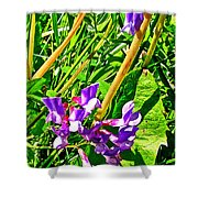 Bird Vetch On Bow River Trail In Banff National Park-alberta  Shower Curtain