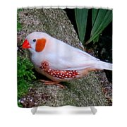 Male Zebra Finch Shower Curtain
