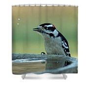 Birdbath Funtime Shower Curtain